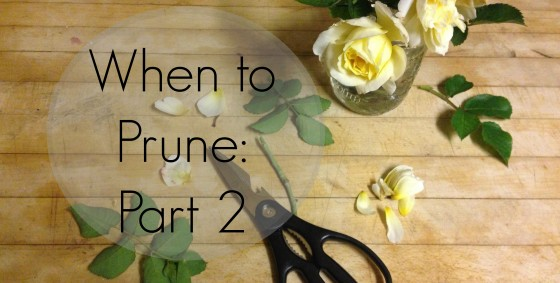 when to prune again