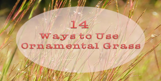 14 ways to use ornamental grass landscape edging blog for Ornamental grass in containers for privacy