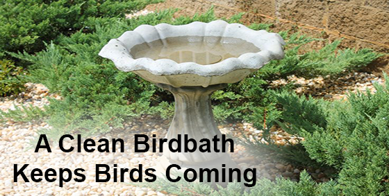 clean bird bath house