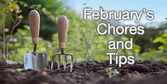 february chores and tips