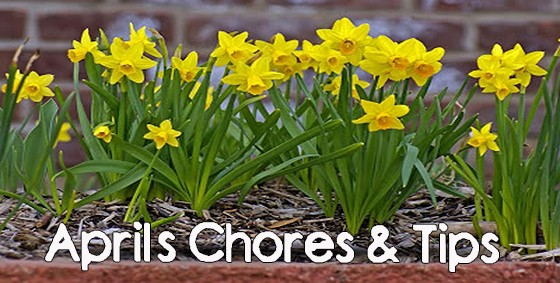 april chores and tips