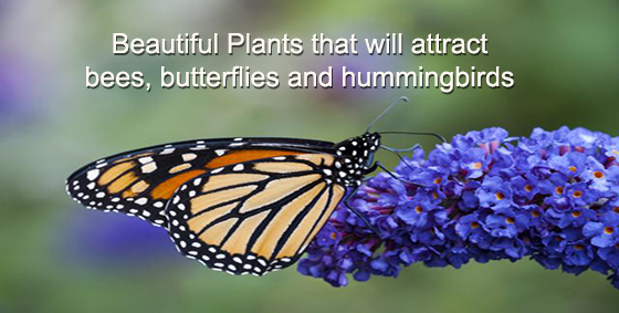 47 Plants That Attract Bees Butterflies And Hummingbirds