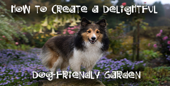 dog friendly garden