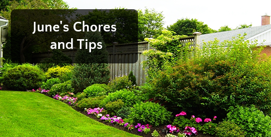junes chores and tips