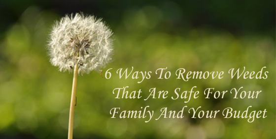 6 Ways to Remove Weeds That Are Safe for your Family and your Budget