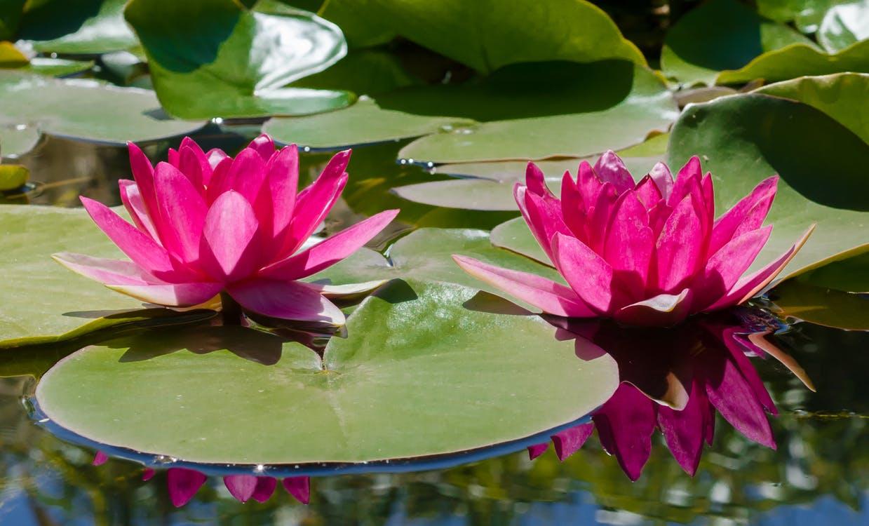 water-plant-leaf-pond
